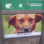Governo do Estado de SP auxilia na busca de animais perdidos ou abandonados