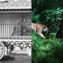 Minas Gerais é o décimo estado brasileiro a proibir animais em circo